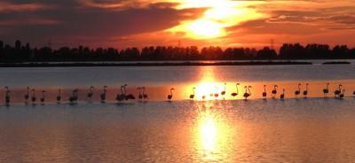 delta del po autunno tenuta goro veneto