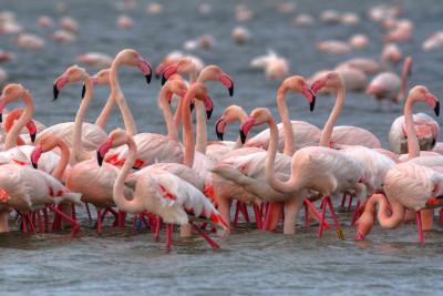 birdwatching sul delta del po