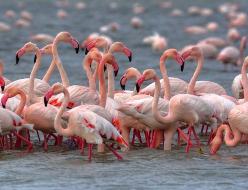 Birdwatching sul Delta del Po: oltre 370 le specie